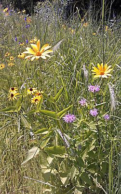 Prairie and grassland managmement guide
