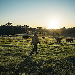 Rancher walking in pasture