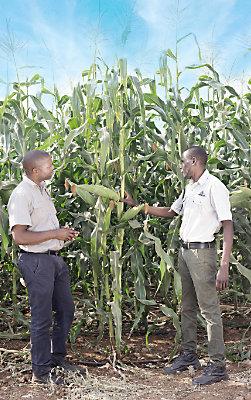 Pioneer® Agronomy