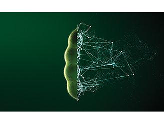 Seed Images Revolutionised