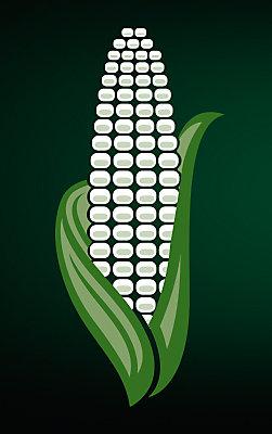 corn_251x400