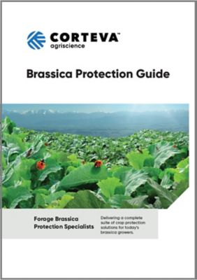 Forage Brassica Guide
