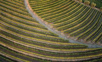 IMG-gestion-durable-des-ravageurs-vigne