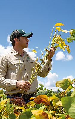 Homem de boné segurando planta de soja e olhando para ela, com céu azul de fundo.
