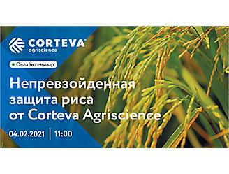 Непревзойденная защита риса от Corteva Agriscience