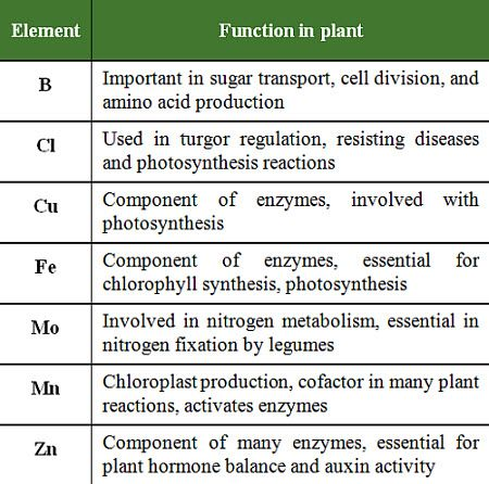 Micronutrients For Crop Production Pioneer Seeds
