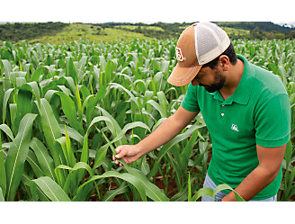 Homem na lavoura de milho olhando para as plantas.