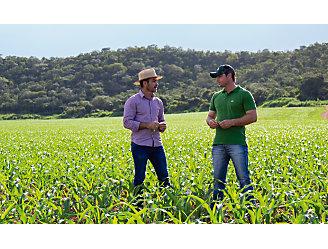 Dois homens conversando no meio de uma lavoura de milho.