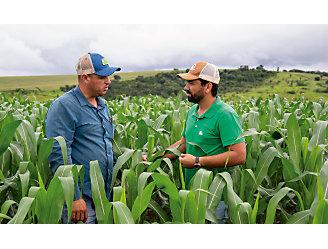 Dois homens no meio de uma lavoura de milho com a planta alta.