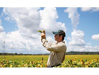 Homem olhando para uma planta de soja no meio da lavoura.