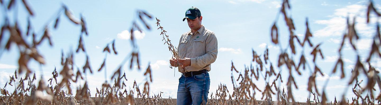 Homem de boné olhando para talhão de soja no meio da lavoura de soja.
