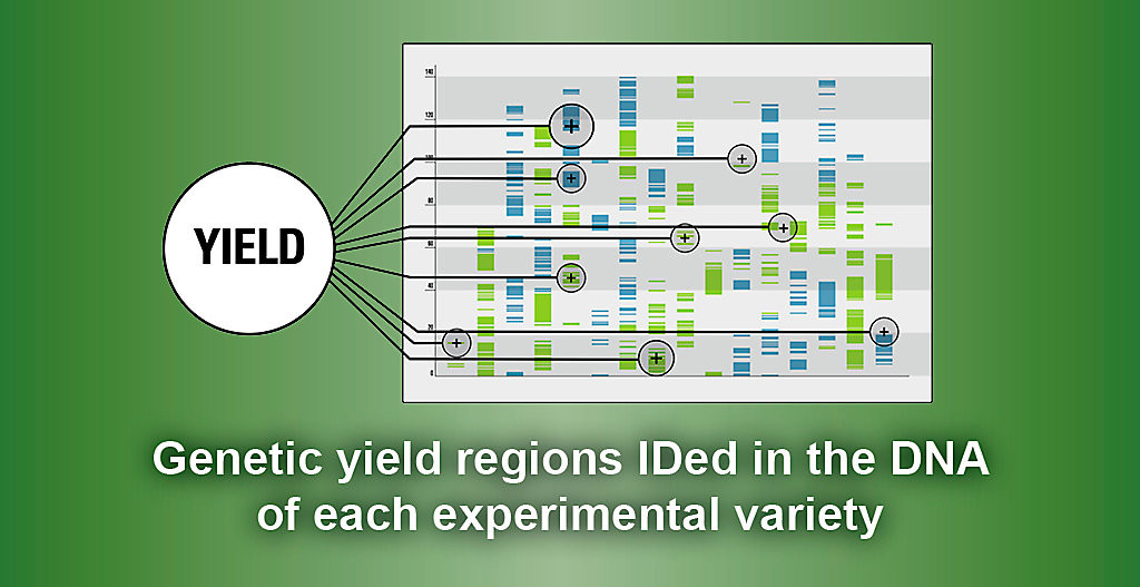 Genetic Yield Graph