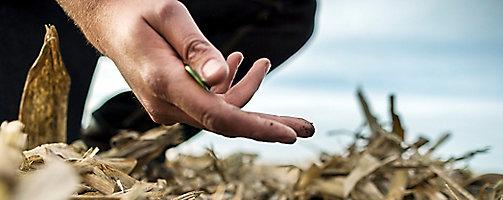 Soybean stubble