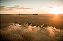 Harvesting soybeans at sunset