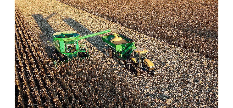 Harvesting a corn field