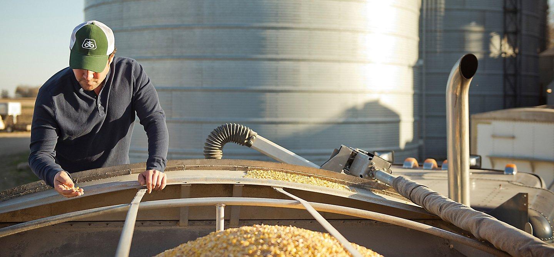 Corn seed in grain bin