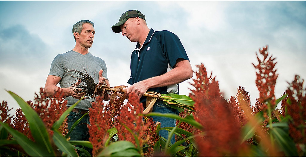 Rep and farmer consulting