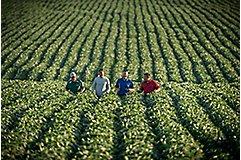 Local Pioneer team walking soybean field