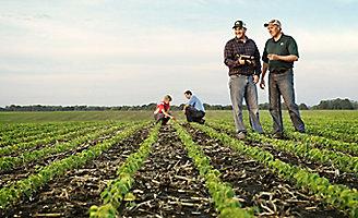 Inspecting midseason soybean field