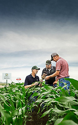 Growing Point Agronomy corn field