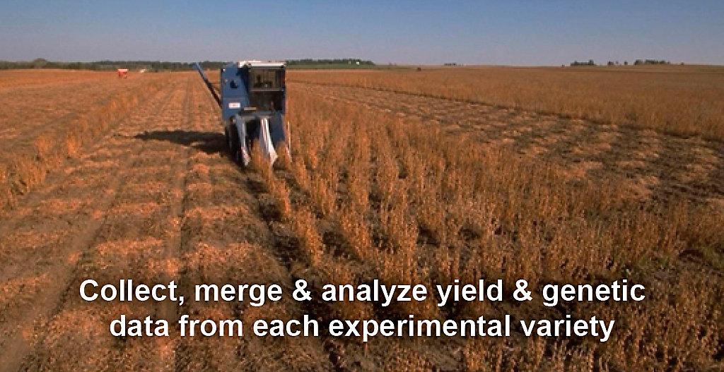 Research Harvest Plot Maps