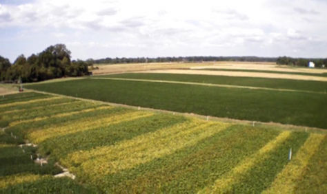 Aerial view of soybean planting date and maturity trial at the University of Maryland.