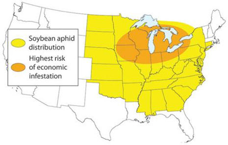 Soybean aphid highest risk of economic infestation.