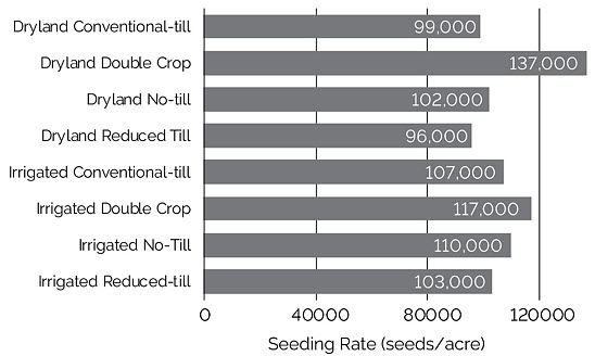 Chart showing average seeding rate of NSP Yield Contest national winners from 2017, by division.