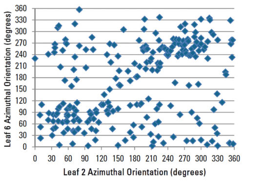 Azimuthal orientation of leaf 6 compared to leaf 2 for all corn plants sampled.