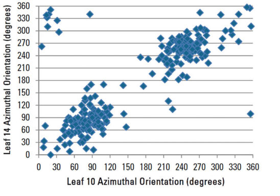 Azimuthal orientation of leaf 14 compared to leaf 10 for all plants sampled.