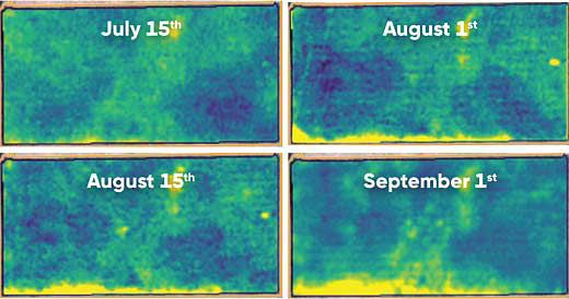 Sequence of Crop Health Index maps showing progression of affected area along a field edge from June 10 to September 1, 2017