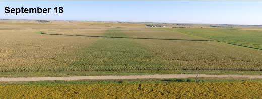 Photo - Drone field images captured in mid-September showing improved plant health in the corn fungicide treatment strip.