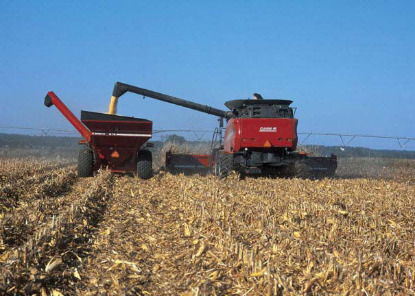 Photo showing a harvesting operation in corn.