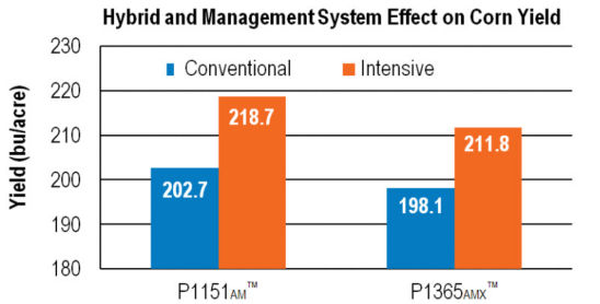 Chart: Hybrid/Mgmt System Effect on Yield