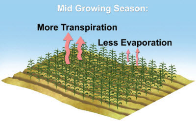 Sources of ET in the middle of the growing season