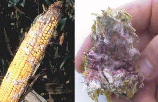 Photos: Mold spores are virtually everywhere in the environment