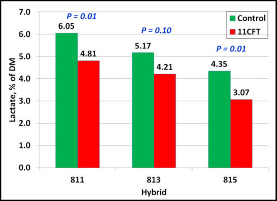 Lactate in control and 11CFT-treated hybrids