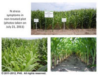N stress symptoms in non-treated plot