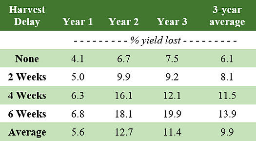 Effect of harvest delay on soybean field losses.