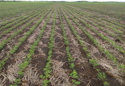 Pioneer® variety P47T89(R) treated with PPST 24 days after planting on Sharkey clay.