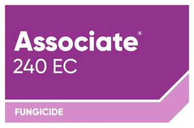 Associate 240 EC_Logo