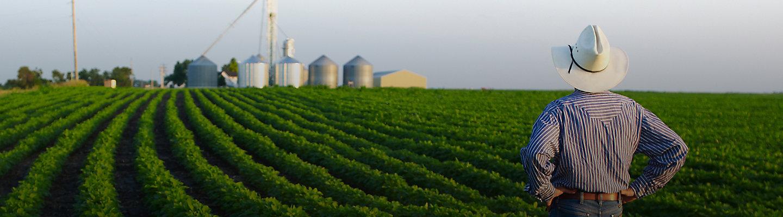 Farmer in field facing horizon