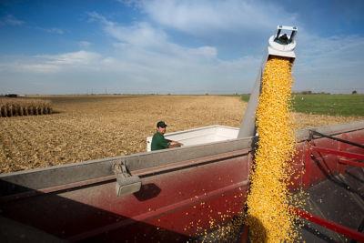 Corn_Harvest_Minnesota_C0140_F_new