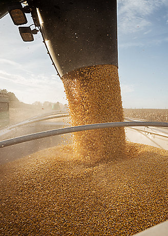 Corn_Harvest_Minnesota_C1446_F_328_460.png
