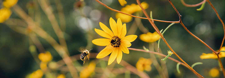 wild flowers in ROW