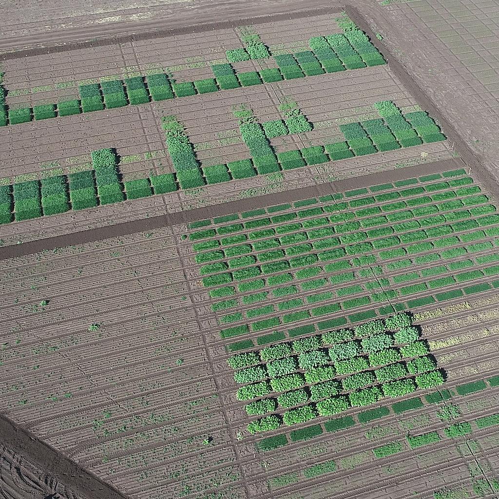 Trezac Arylex active herbicide trials in the Corteva research site at Breeza, NSW