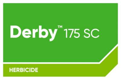 Derby 175 SC