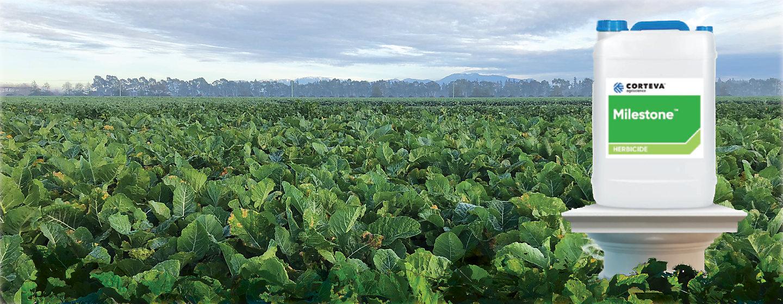 Milestone Herbicide
