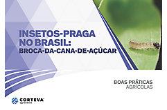 Insetos praga no Brasil: Broca-da-cana-de-açúcar