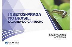 Insetos praga no Brasil: Lagarta-do-cartucho